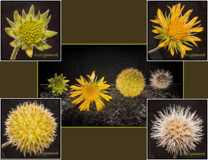 flower 4budn1b copy