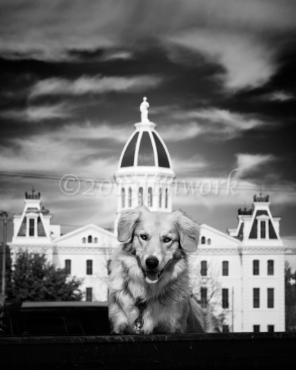 Marfa dog1 copy