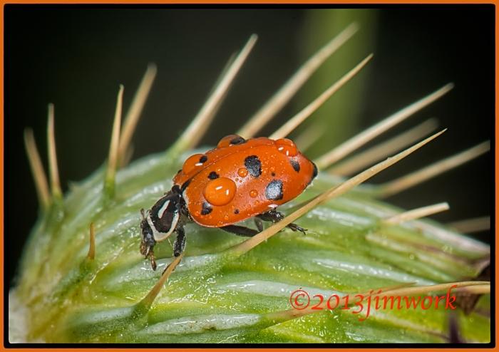 13-8-3 moth079 copyA
