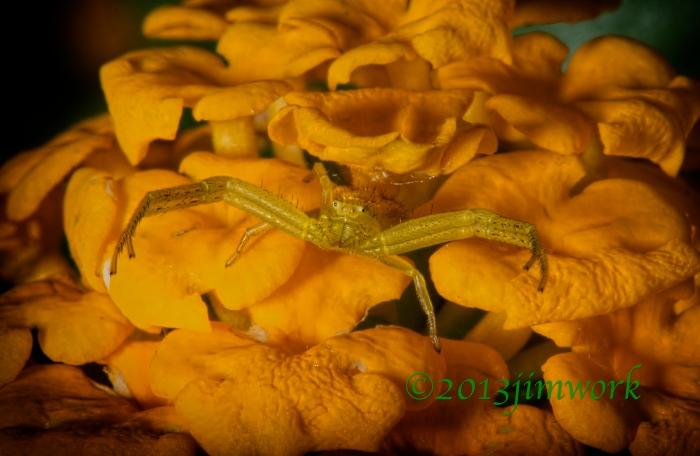 1388 green spider_7050B