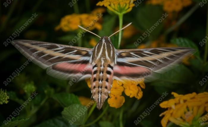 13-09-01 moth_8891 copy