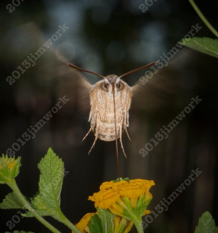 13-09-01 moth_8920 copy