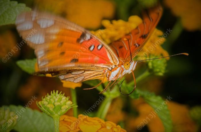 13-09-02 butterfly_8973_v1