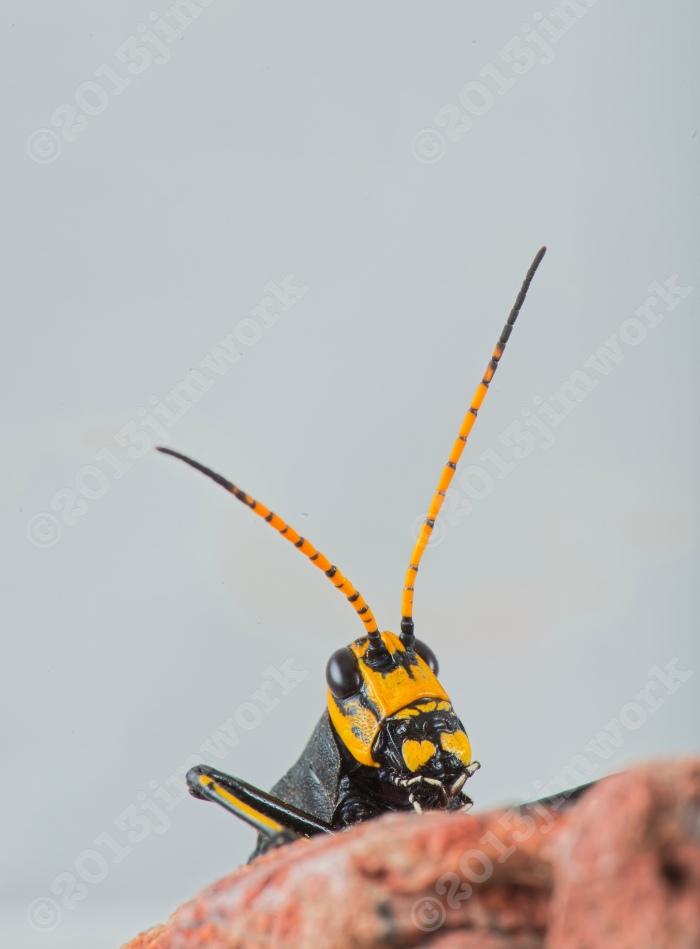 13-09-16 grasshopper_0583 copy