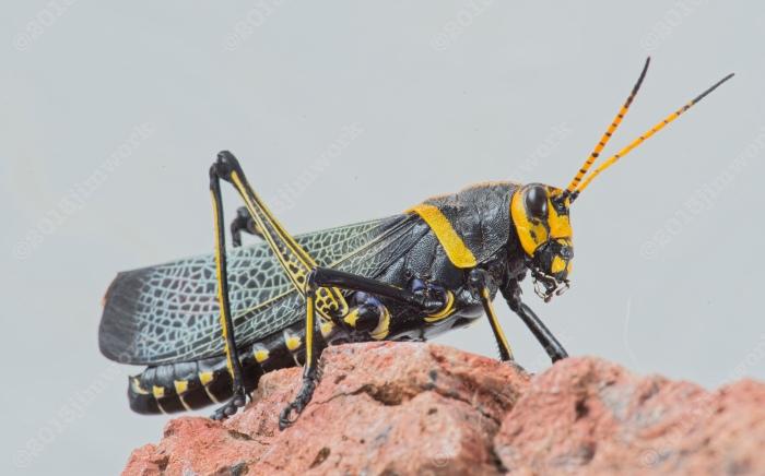 13-09-16 grasshopper_0592 copy