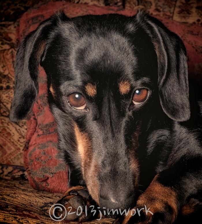 13-10-06 dogs_0766 copy copy