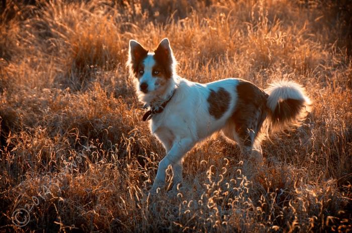 14-01-21 deer dog_0953