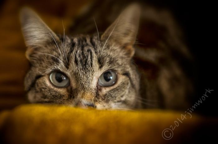 14-02-07mindycat_1802