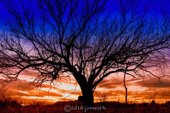 14-02-25tree_2054 copy