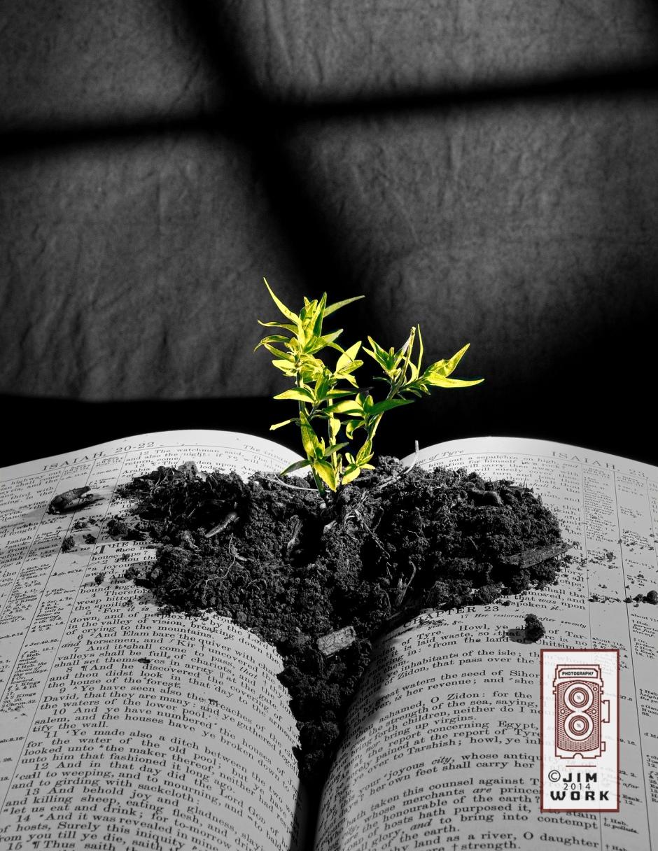 13-09-03 bible plant_4964 copy copy